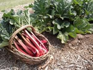 Spring Event Planning? Add some Seasonal Rhubarb to the Menu!